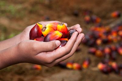 Palmeolje brukes mindre, men den som brukes er sertifisert, viser en ny rapport.