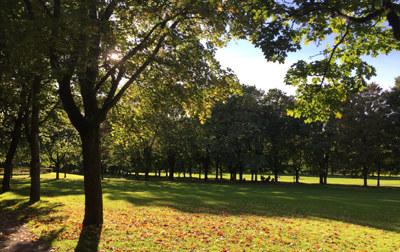Gressplen i Vigelandsparken med trær rundt.