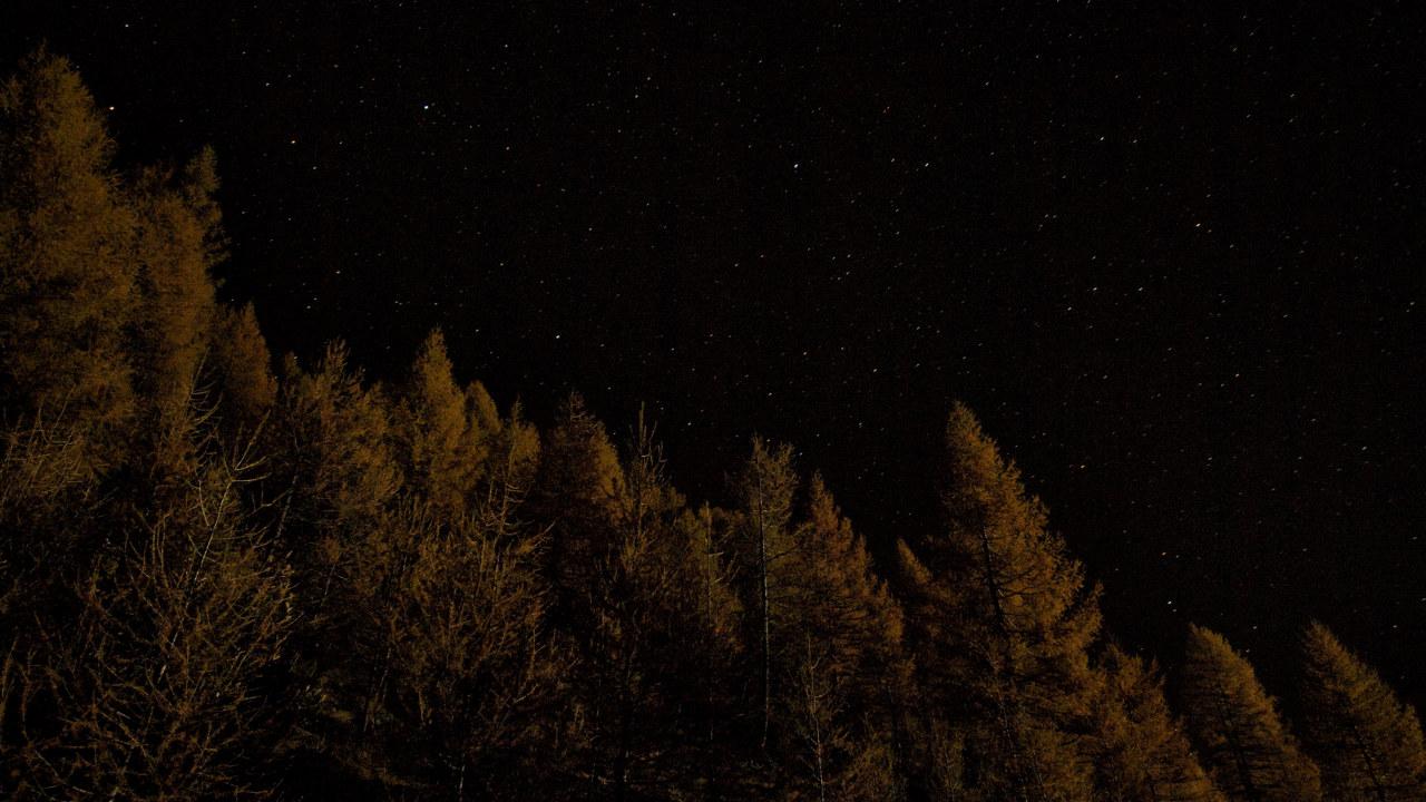 Skog i natt