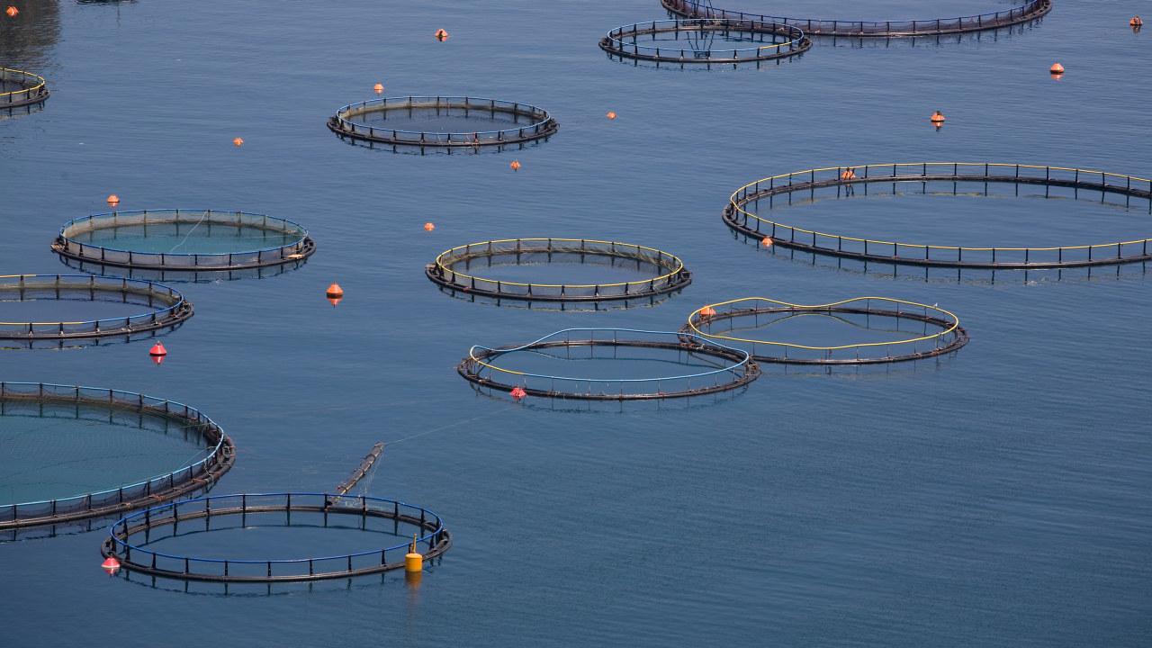 Fiskeoppdrettsanlegg i havet