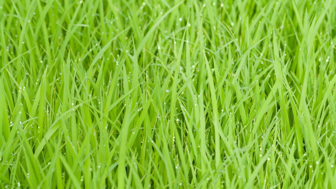 Nærbilde av gress
