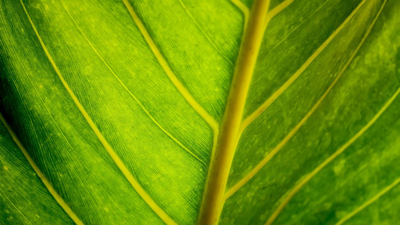 grønt blad gjennomlyst av solskinn