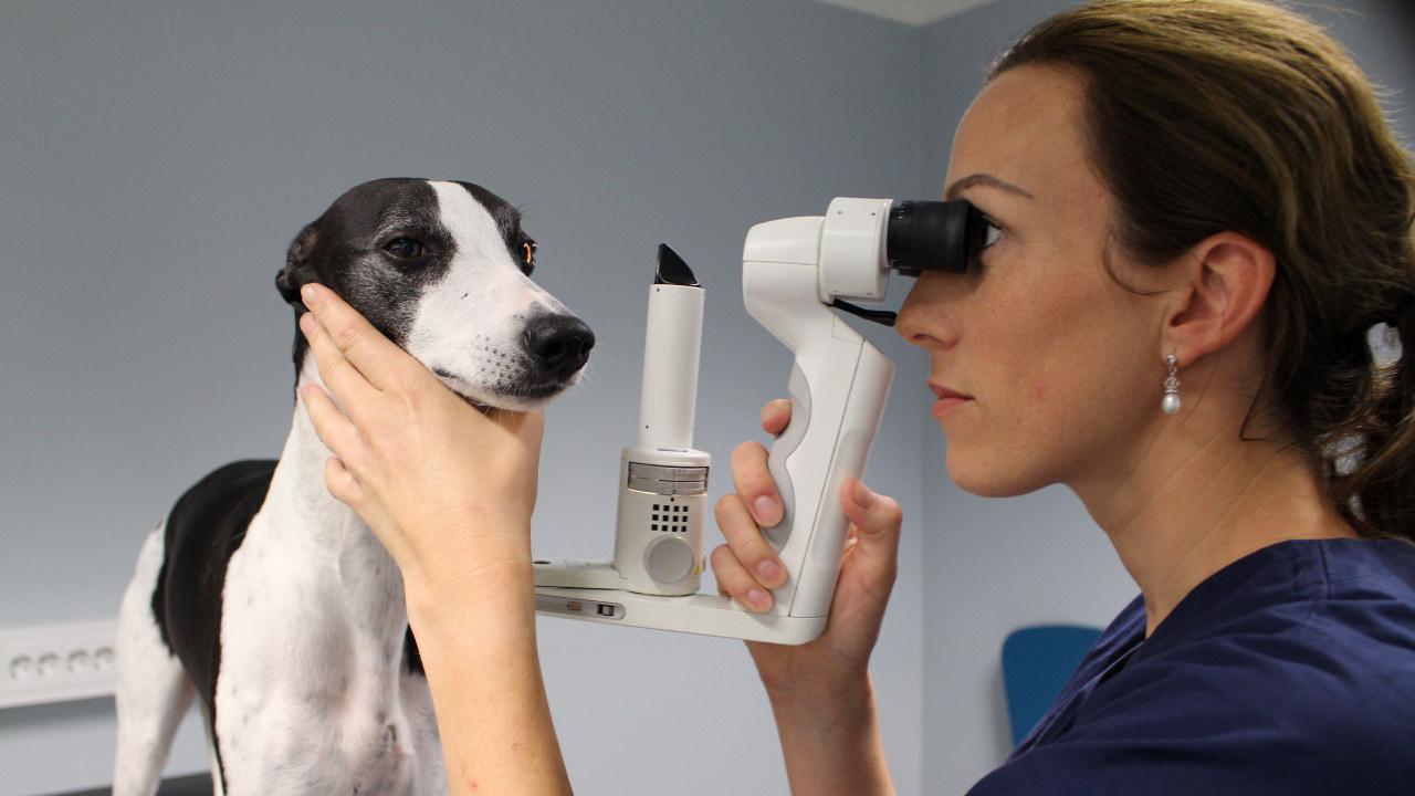 Veterinær sammen med en hund