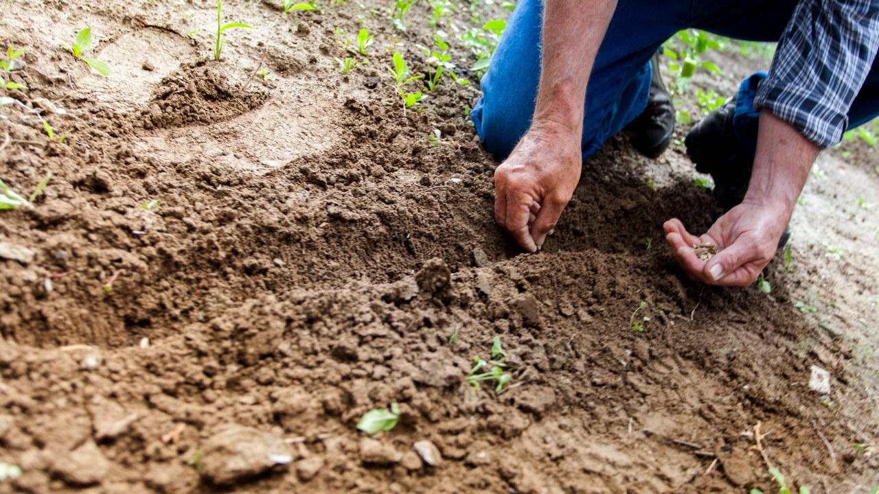 Nærbilde av hender som planter frø i jorda